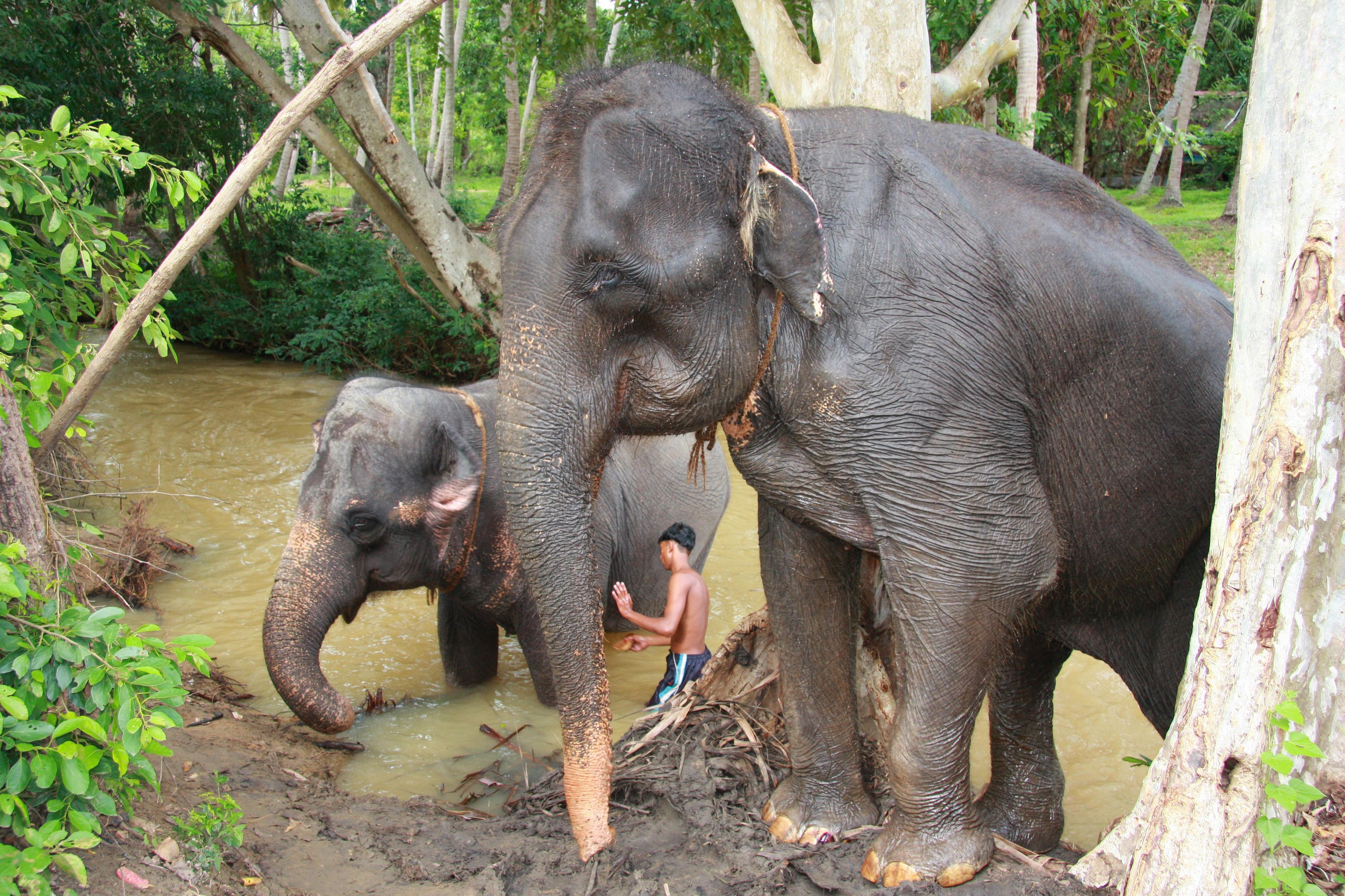 La Credenza Del Contadino Ruoti : Sri lanka perla o lacrimau d e kumbh mela in india kel